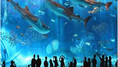 Vinpearl Aquarium Times City địa điểm vui chơi ở hà nội dịp 30/4