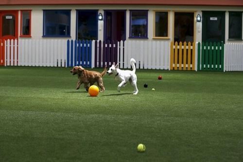 khu vui chơi cho thú cưng